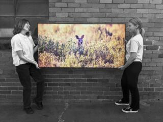 Hopping into the weekend (pardon the pun), with a freshly produced piece of classy Australian fauna from the lens of Campbell Mattinson. It was a pleasure printing and framing this beautiful work, and if you would like to discover more of Campbells' creative work for yourself, stop by his website at https://www.campbellmattinson.com/ or look him up  @campbellmattinson  Have a great weekend everyone! 😊  •  •  •  •  #print2metal #awardwinningprinter #fineartprints #hdmetalprints #chromaluxe #realchromaluxe #photolab #printlab #alittlelifecreative #metalprints #wallart #smallbusinessaustralia #professionalphotographer #australianphotographers #successfulbusinesses
