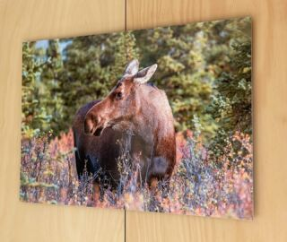 """Once you've had a special image printed on metal there's no going back to old style paper prints with glass frames.....""""Absolutely wrapped with all the prints I've had over the years. Cheers Richard"""" * * *"""